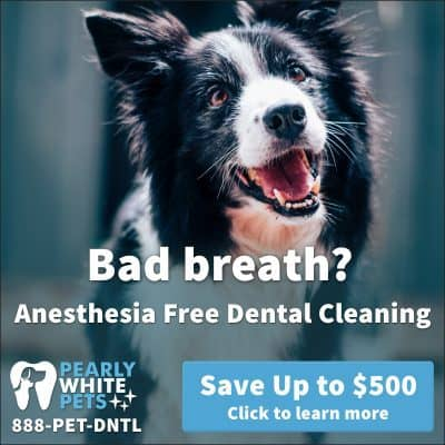 Pearly White Pets anesthesia-free dental cleaning: https://pearlywhitepets.com
