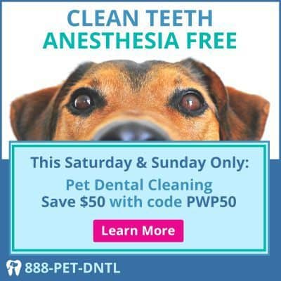 Pearly White Pets Anesthesia-Free Dental Cleaning: https://pearlywhitepets.com/events/