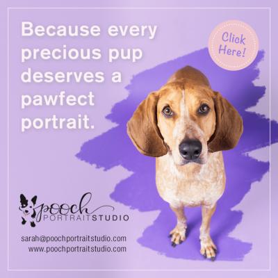 Pooch Portrait Studio
